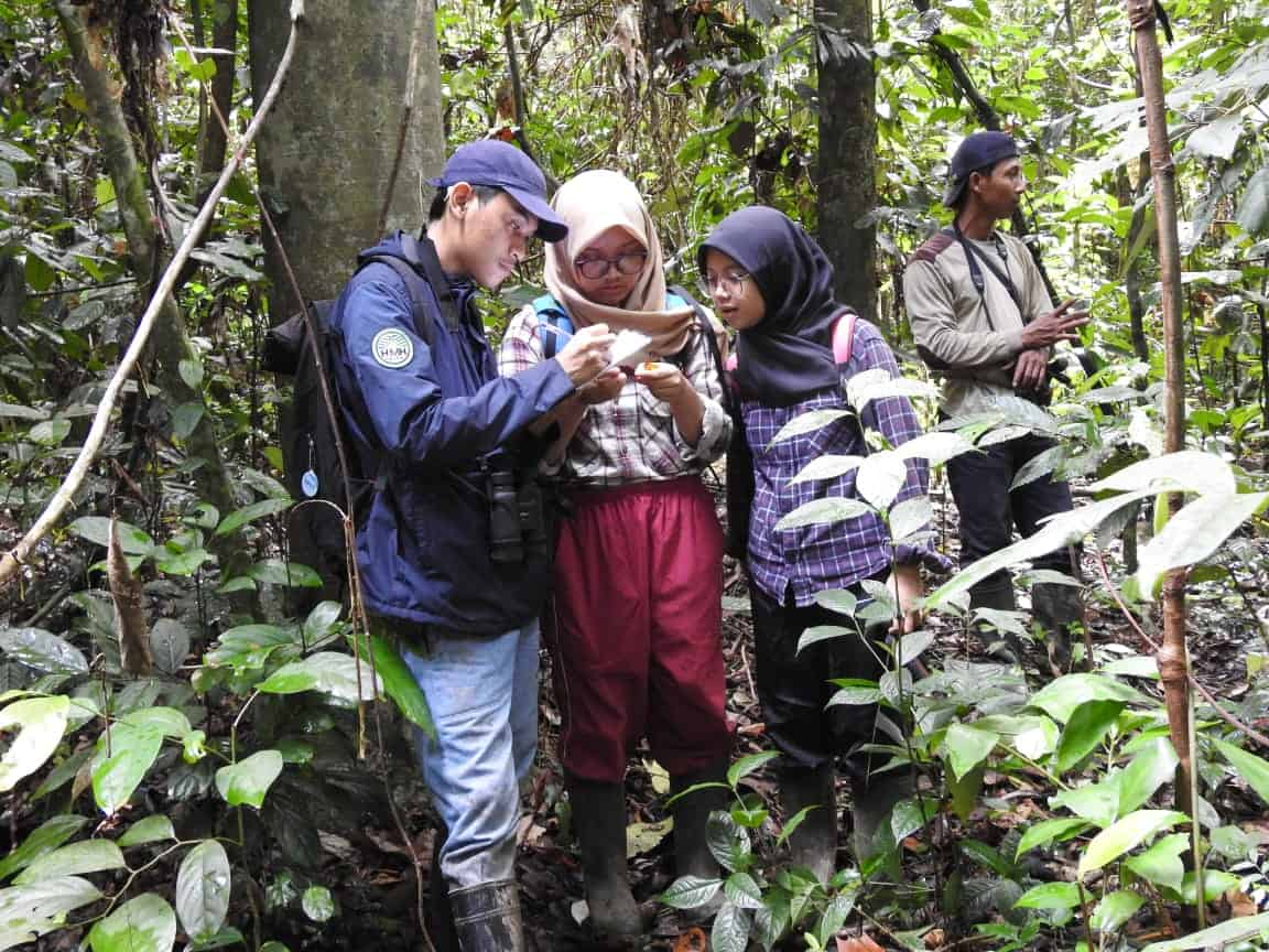 kegiatan pengamatan pohon dipterocarpacea